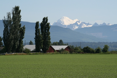 Skagit Farmland Mt Baker Background